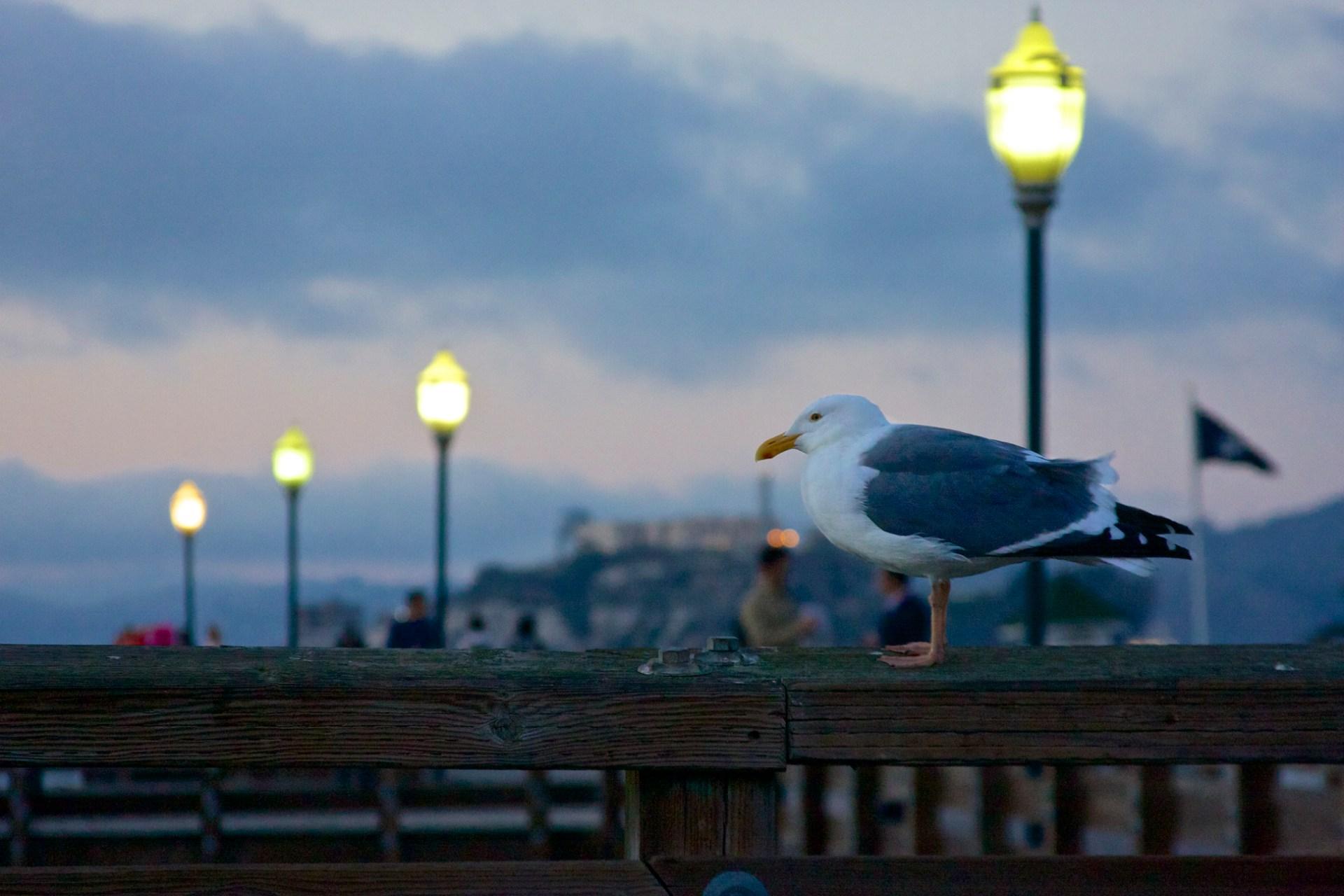 SF Piers 002