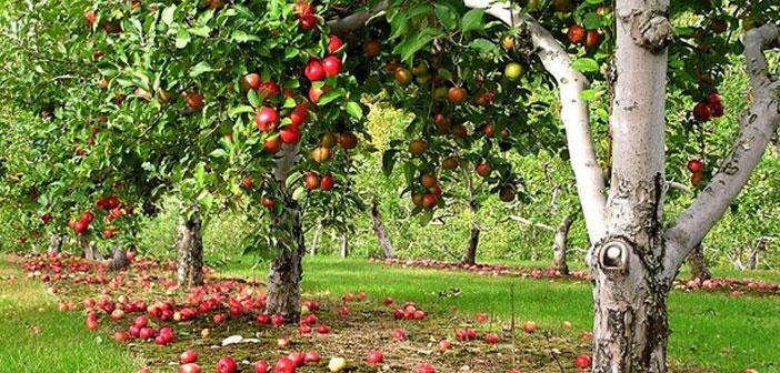 Waldgärten können gesunde Bio-Lebensmittel für alle bringen und das sogar kostenlos! Wach Auf wachaufmenschheit Alternativen