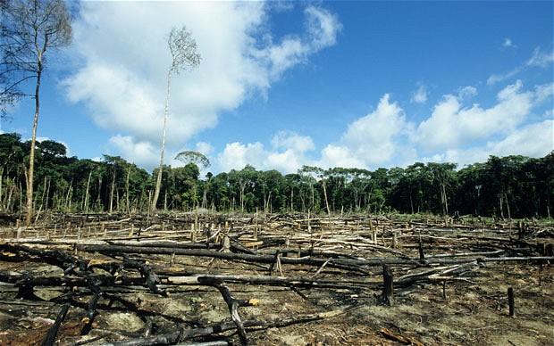 Norwegen verbietet als erstes Land weltweit die Entwaldung Wach Auf wachaufmenschheit.de