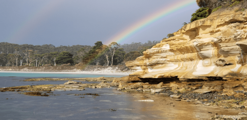 Wild and Comparative Immunology (WACI) workshop in Tasmania (5-6 December 2019)