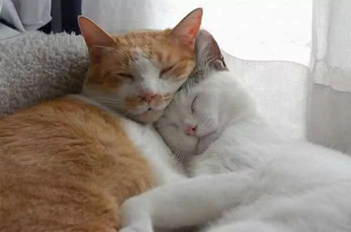 40 Animal Couples That Are So In Love -01
