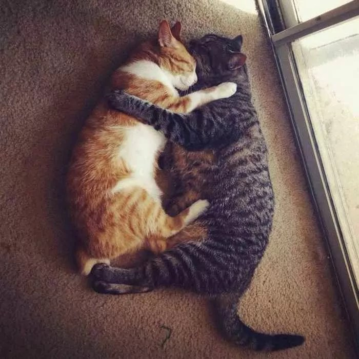40 Animal Couples That Are So In Love -03
