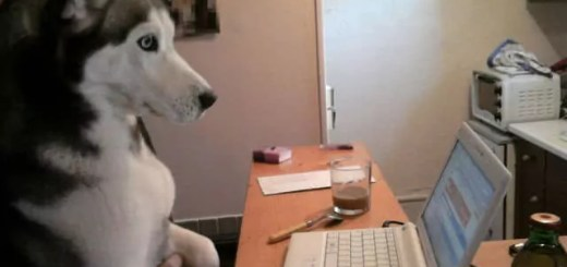 dog-likes-yahoo-mail