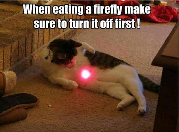 Funny Animal Picture Wackyy Picdump of the Day 2 - 22 Pics-01