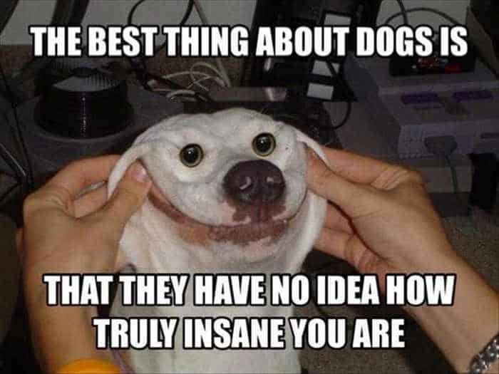 Funny Animal Picture Wackyy Picdump of the Day 2 - 22 Pics-02