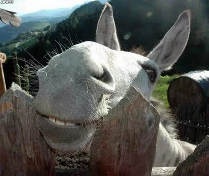12 Funny Laughing Animals That Will Amaze You-11