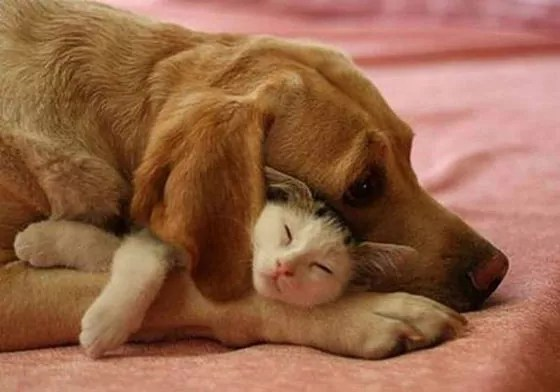Top 10 Funny And Weird Images of Cat And Dog Love Each Other -05