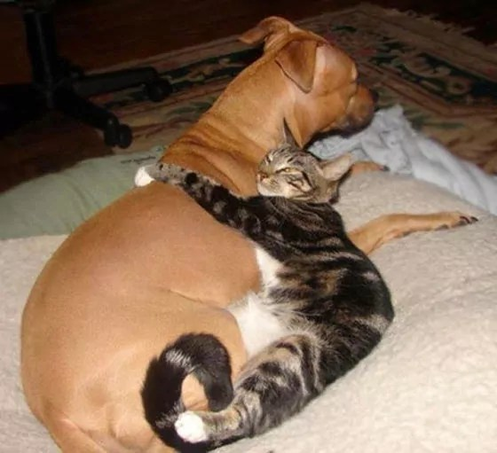 Top 10 Funny And Weird Images of Cat And Dog Love Each Other -07