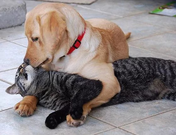 Top 10 Funny And Weird Images of Cat And Dog Love Each Other -10