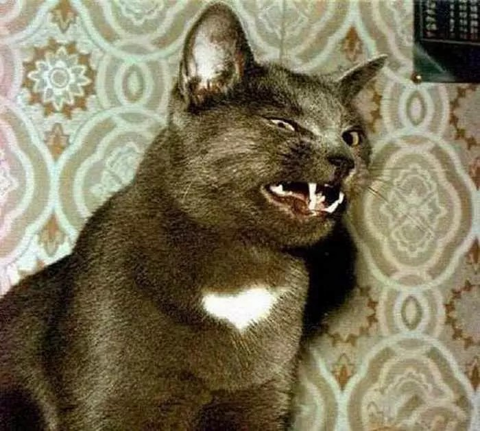 Funny Cats Captured At Unusual Time - 17 Pics -01