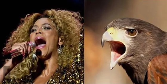 10 Funny Pop Star Celebrities Looks Like Bird Will Blow Your Mind -09