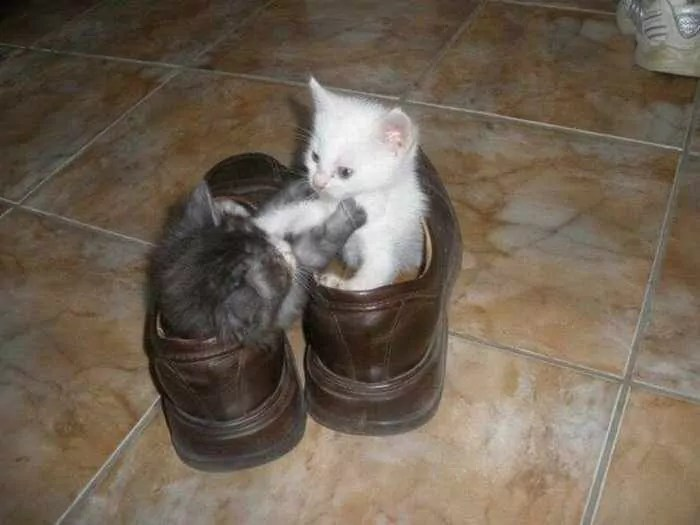 8 Awesome Funny Pictures of Cute Kittens -05