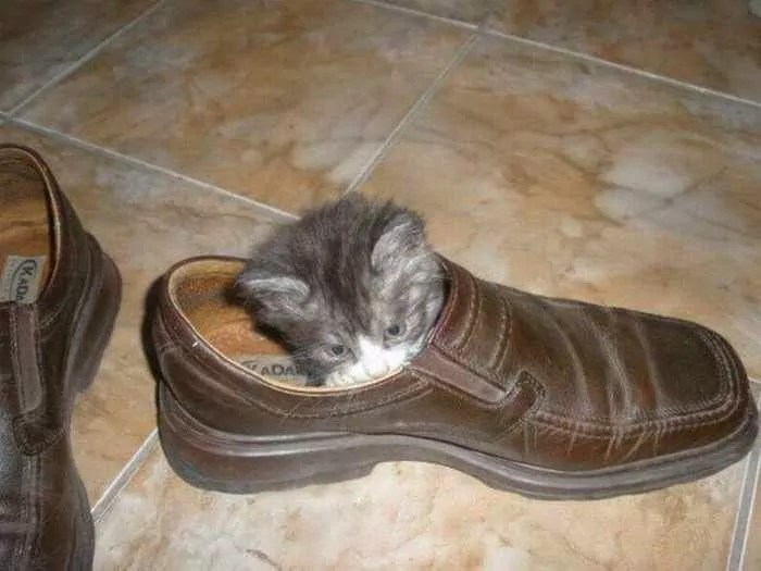 8 Awesome Funny Pictures of Cute Kittens -07