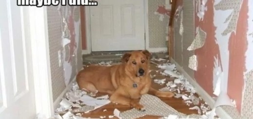 funny-picture-dog