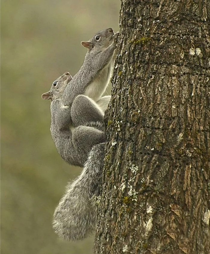 How to Reach Any Goals - Funny Squirrels Picture Will Make Your Day