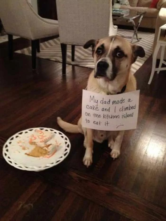 55 Hilarious Examples Of Dog Shaming At Its Best -01