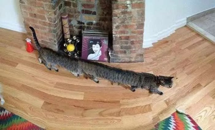The 60 Most Awkward Panoramic Photo Fails Of All Time -03