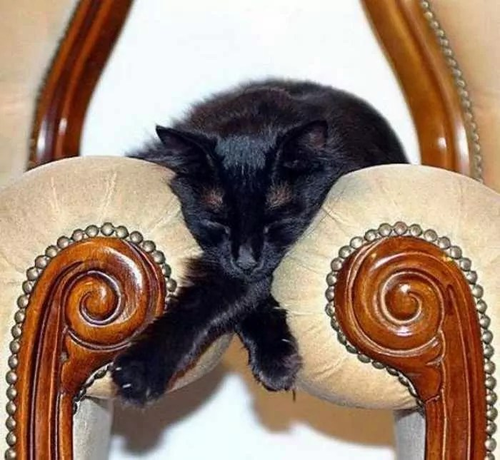 20 Awesome Funny Sleeping Cats -01