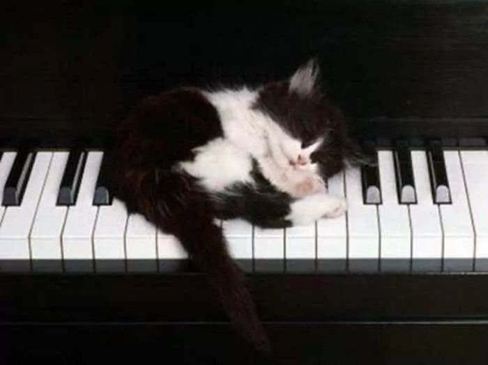 20 Awesome Funny Sleeping Cats -02