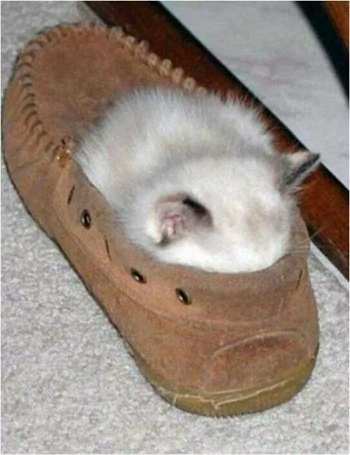 20 Awesome Funny Sleeping Cats -03