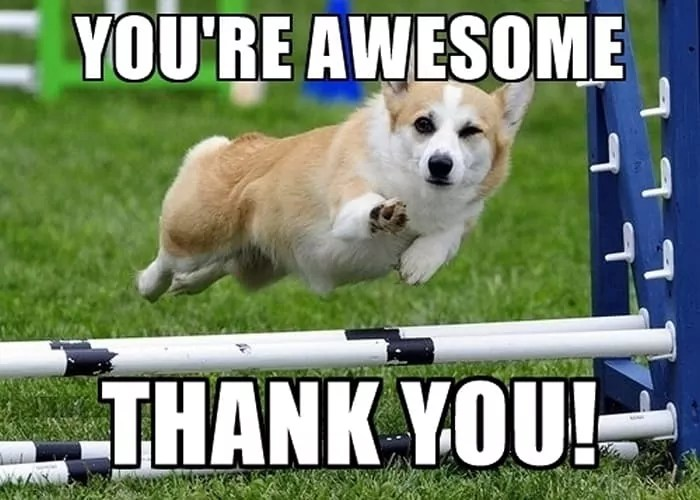 Funny Animal Thank You Meme : Thank you meme pictures that will make your day page