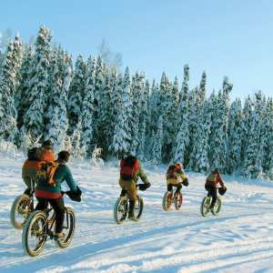 Fat Tire bikers on willow winter trail system
