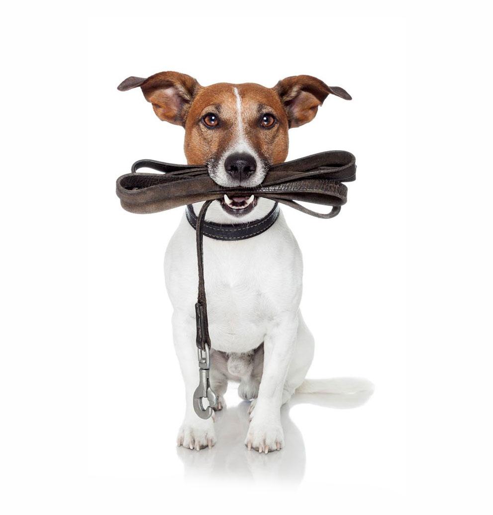 Wadars Animal Rescue Charity Worthing Wadars