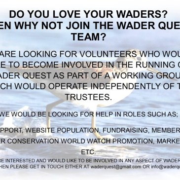 Volunteer for Wader Quest