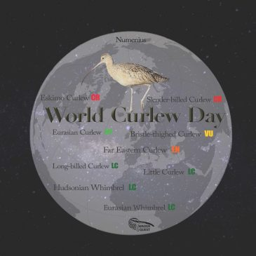 It's World Curlew Day