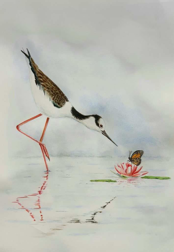 White-backed Stilt with Monarch Butterfly on a Lily: €200 (£175): 29x42cm: Code HL9