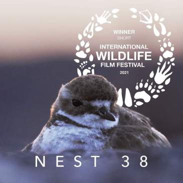 'Banded Dotts' at Kaikoura film, Nest 38, winner at International Wildlife Film Festival.