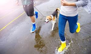 Dog Running With People