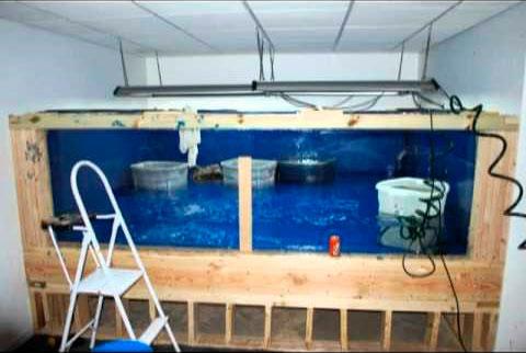 Trout Aquarium Setup