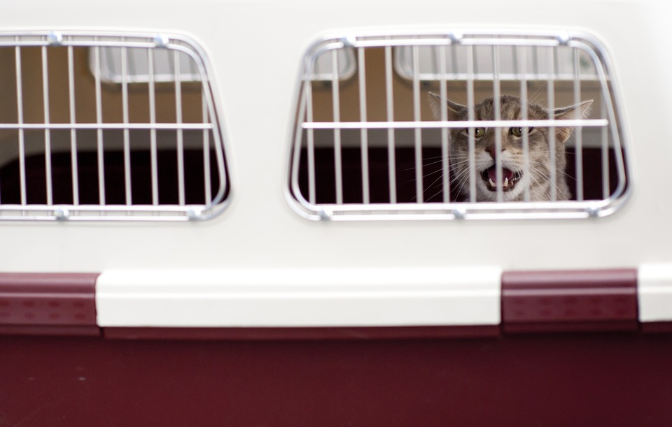 Stress-Free Traveling With Cats