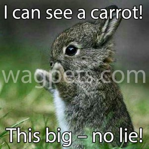 I can see a carrot! This big – no lie!