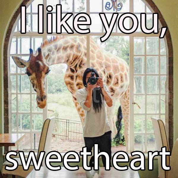 I like you, sweetheart!