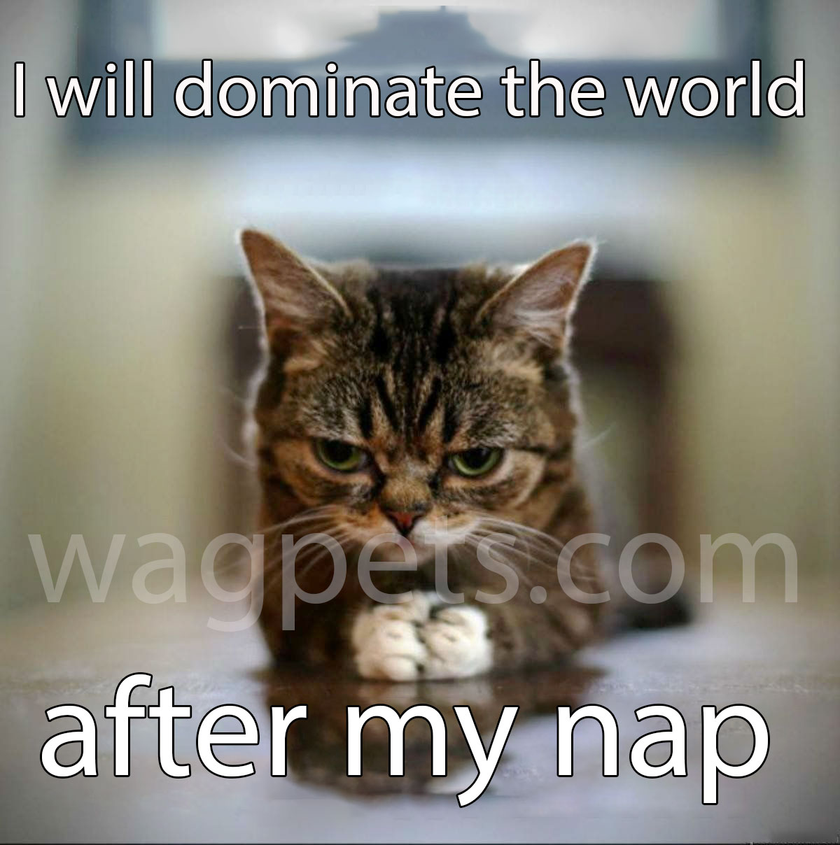 I will dominate the world after my nap