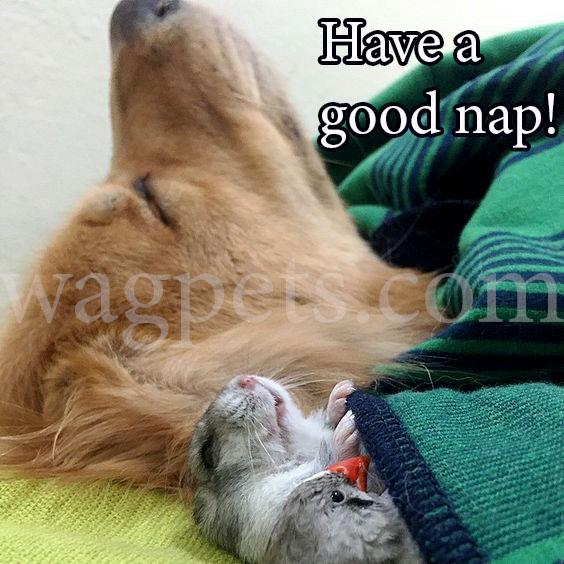 Have a good nap!