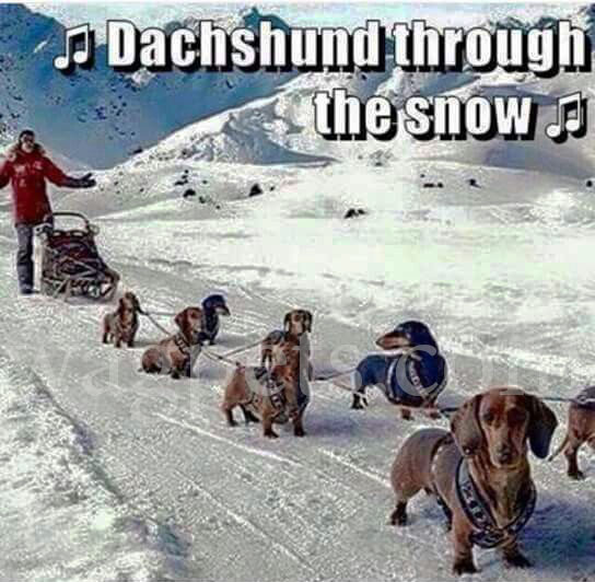 ? Dachshund through the snow ?