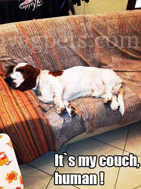 It`s my couch, human!