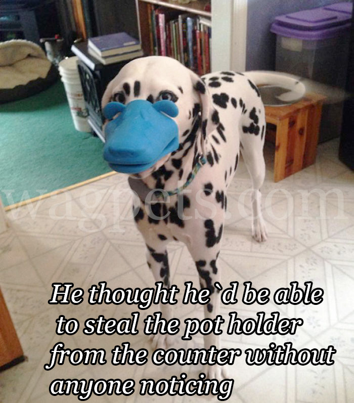 He thought he`d be able to steal the pot holder from the counter without anyone noticing