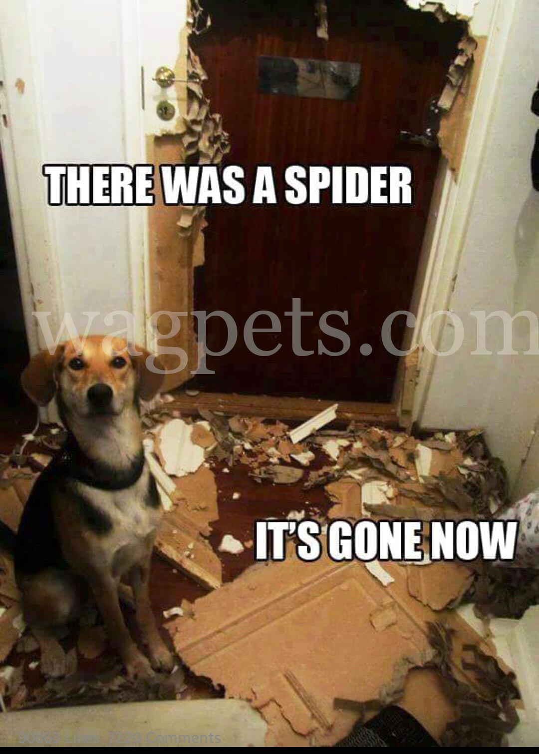 There was a spider. It`s gone now.