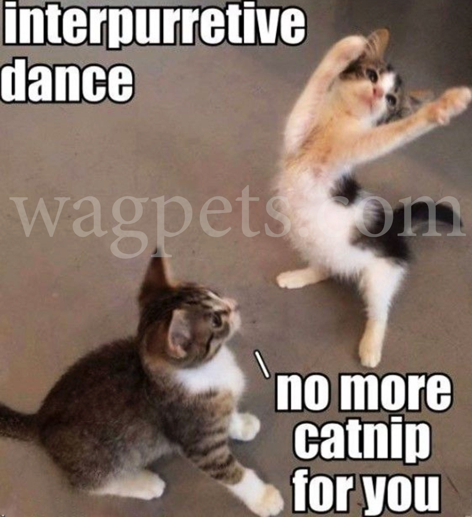 Interpurretive dance. No more catnip for you.