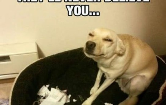 Go on, tell them I ate your homework. They'll never believe you…