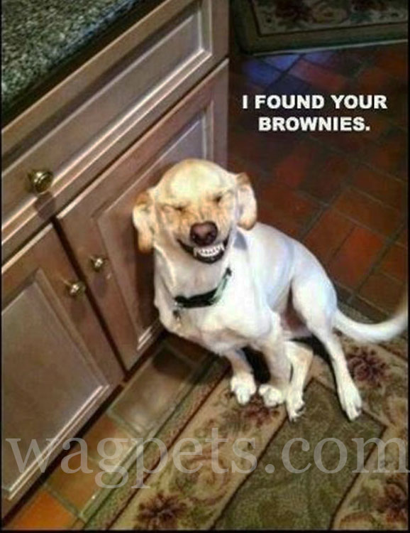 I found your brownies.