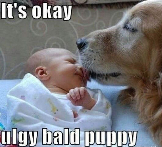 It's okay ugly bold puppy
