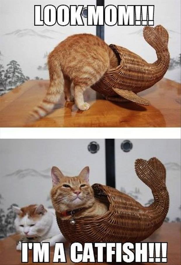Look, Mom! I'm a catfish!!!