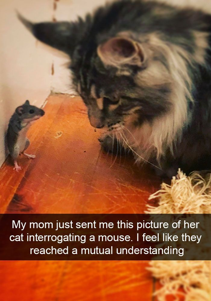 My Mom just sent me this picture of her cat interrogating a mouse. I feel like they reached a mutual understanding.