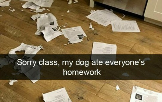 Sorry class, my dog ate everyone's homework
