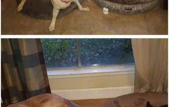 Got the dogs new beds for Christmas. I should have gotten them some courage…